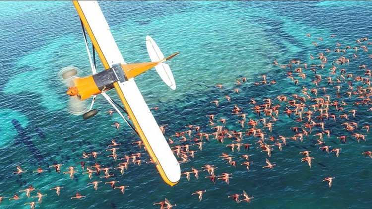 1 بازی Flight Simulator برای Xbox منتشر شد